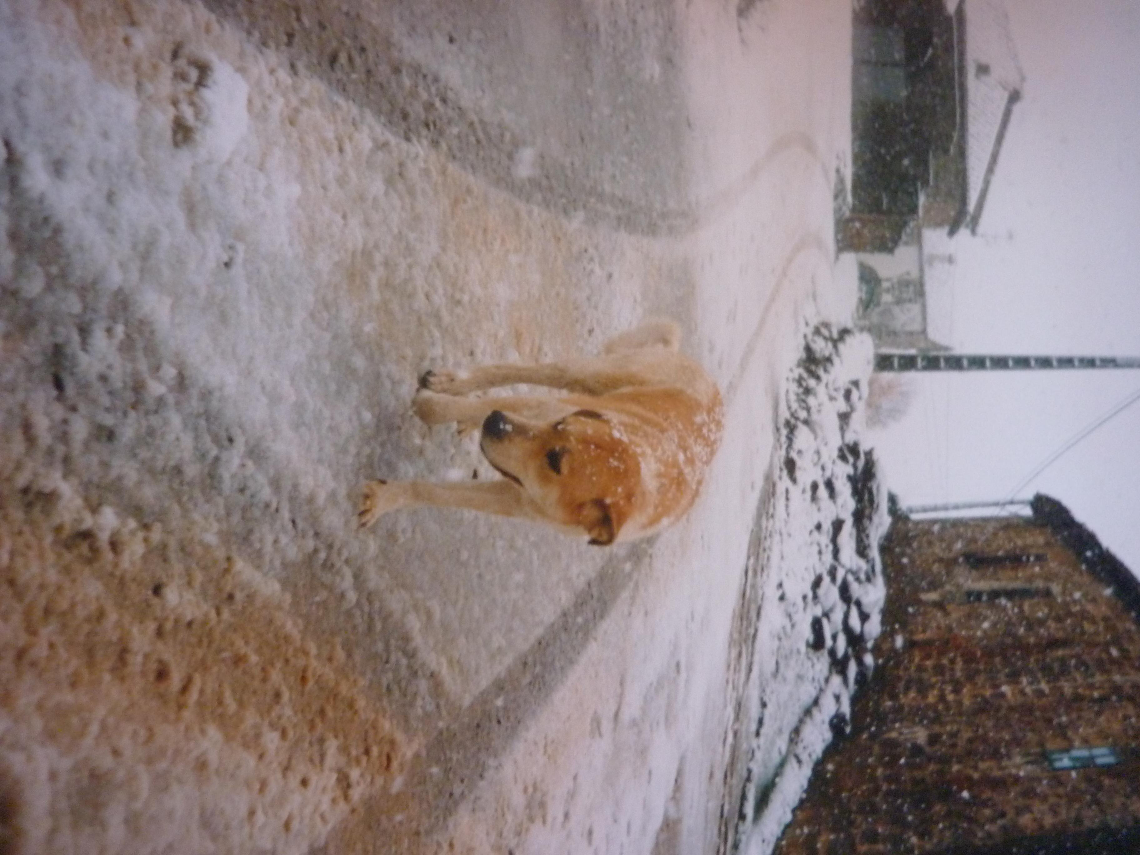https://navamuel.es/images/Animales/Perro.jpg