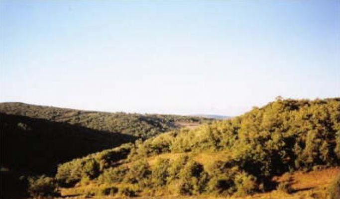 https://navamuel.es/images/Vistas/Bosques.jpg